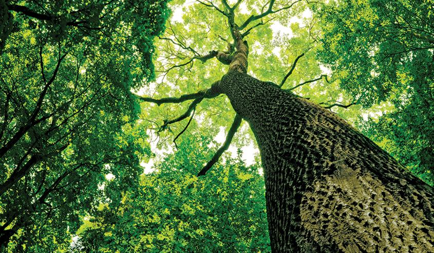 Verifying family trees